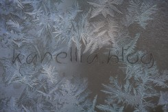 frosty window